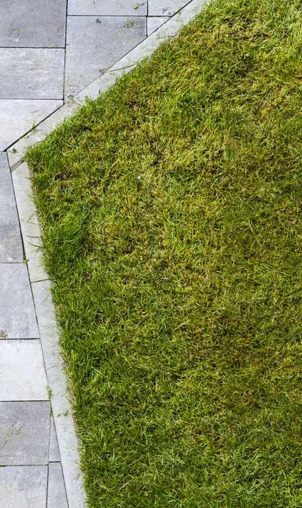 Five Brothers Enterprises Inc. Lawn Dethatching