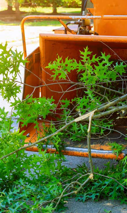 Five Brothers Enterprises Inc. Tree Trimming
