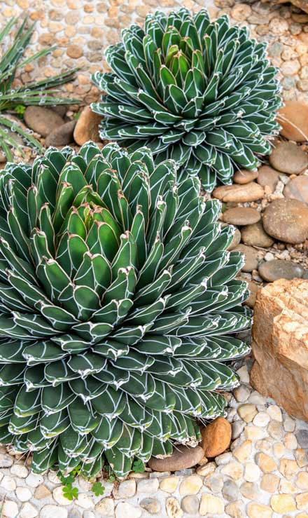 Five Brothers Enterprises Inc. Xeriscaping